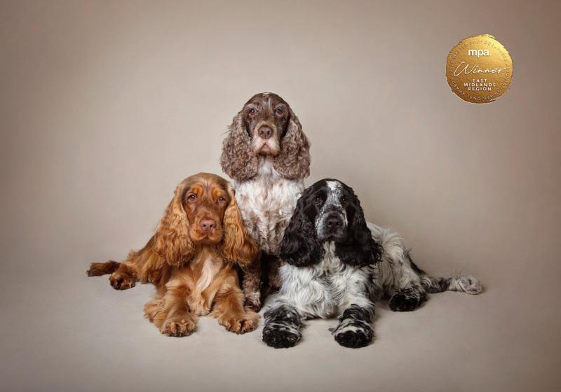 Johanna-Charlton-Dog-Photography-Equine-Photography-Lincolnshire-11