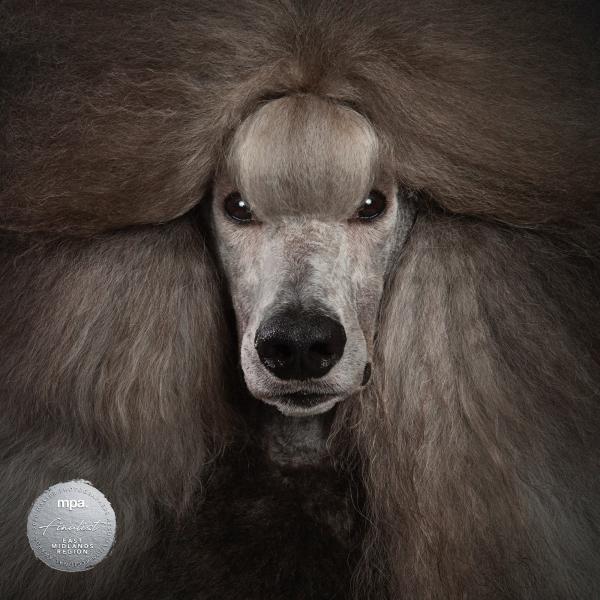 Johanna-Charlton-Dog-Photography-Equine-Photography-Lincolnshire-13