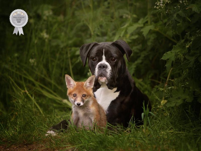 Johanna-Charlton-Dog-Photography-Equine-Photography-Lincolnshire-15