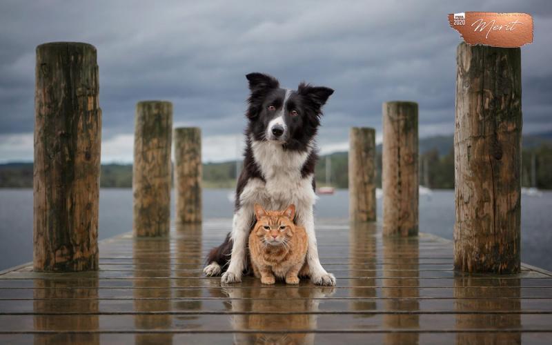 Johanna-Charlton-Dog-Photography-Equine-Photography-Lincolnshire-16
