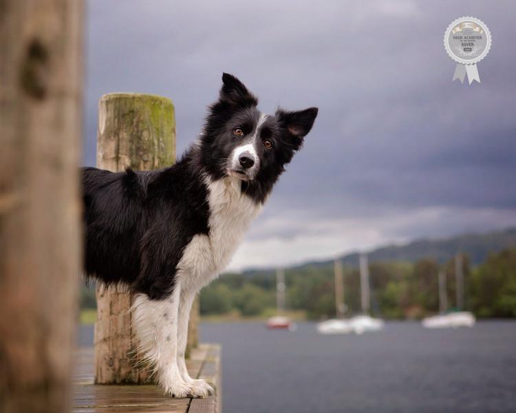 Johanna-Charlton-Dog-Photography-Equine-Photography-Lincolnshire-17