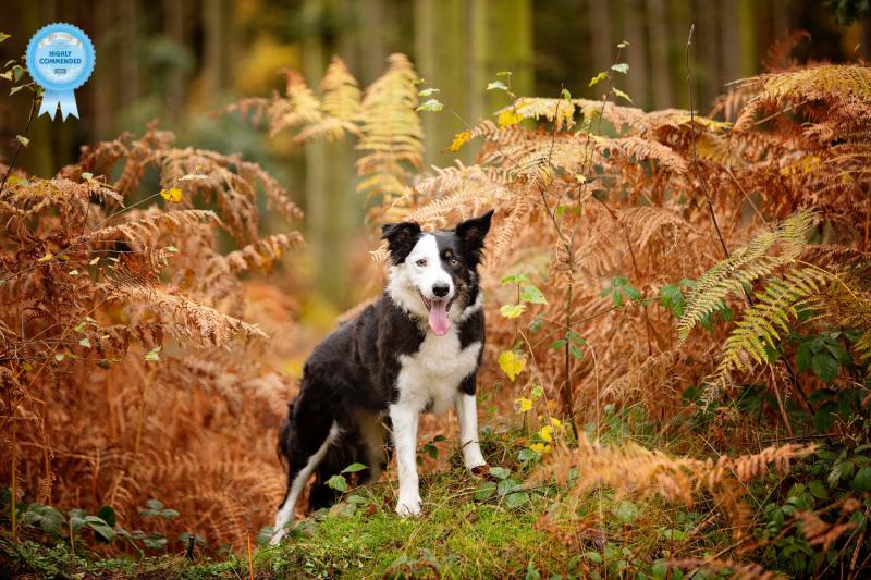 Johanna-Charlton-Dog-Photography-Equine-Photography-Lincolnshire-2
