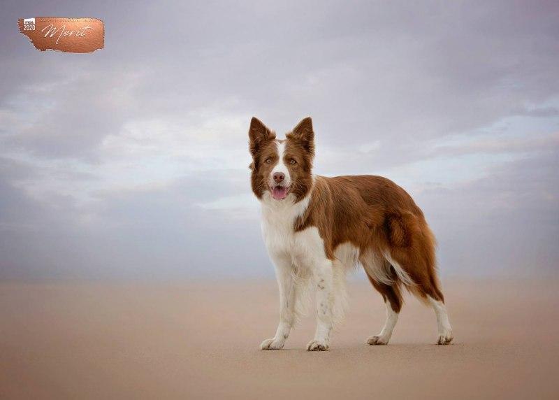 Johanna-Charlton-Dog-Photography-Equine-Photography-Lincolnshire-20