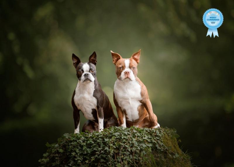 Johanna-Charlton-Dog-Photography-Equine-Photography-Lincolnshire-21