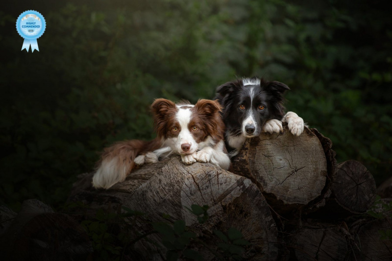 Johanna-Charlton-Dog-Photography-Equine-Photography-Lincolnshire-23