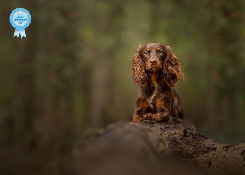 Johanna-Charlton-Dog-Photography-Equine-Photography-Lincolnshire-29