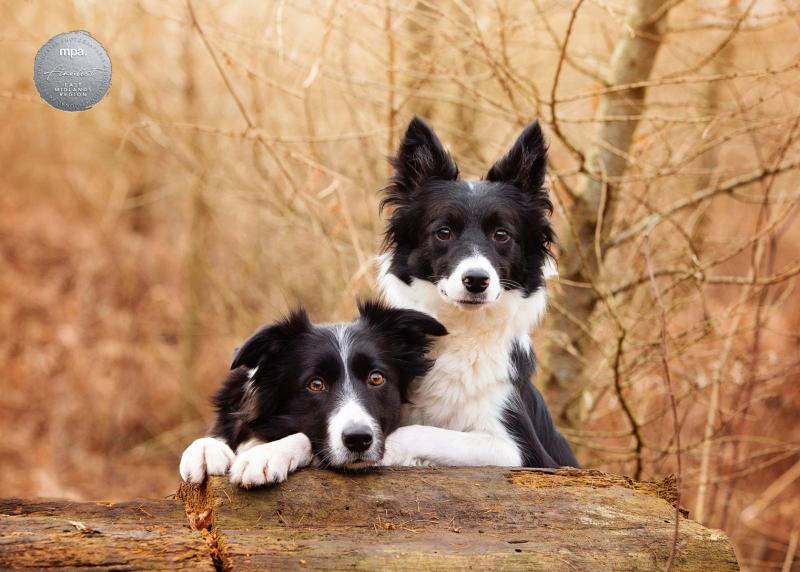 Johanna-Charlton-Dog-Photography-Equine-Photography-Lincolnshire-3