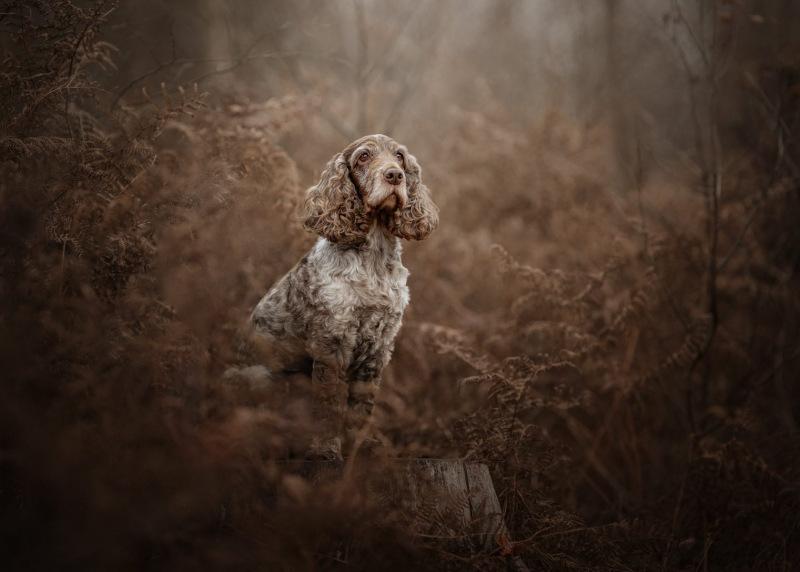 Johanna-Charlton-Dog-Photography-Equine-Photography-Lincolnshire-36