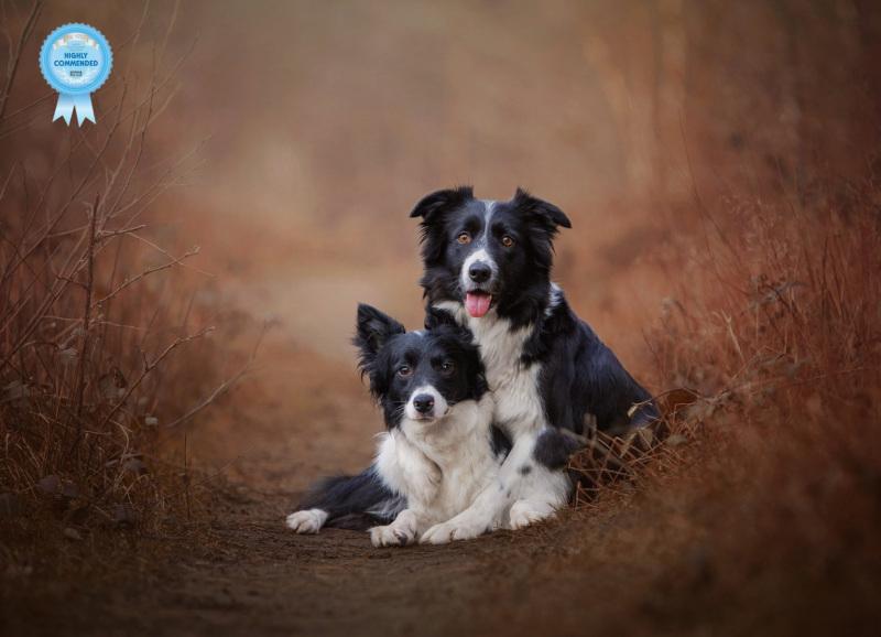 Johanna-Charlton-Dog-Photography-Equine-Photography-Lincolnshire-4