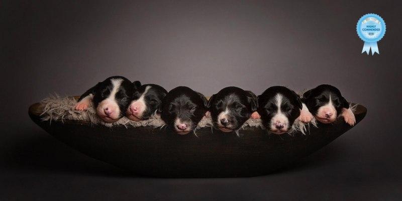 Johanna-Charlton-Dog-Photography-Equine-Photography-Lincolnshire-7