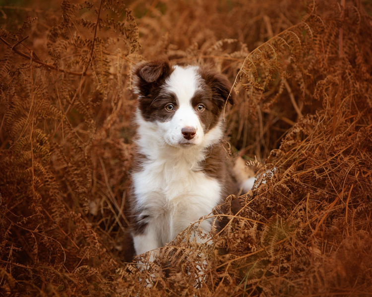 Wildair-Portraits-Dog-Photography-Equine-Photography-Lincolnshire-21