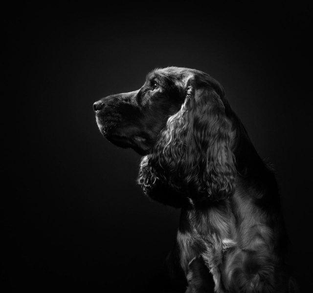 Wildair-Portraits-Dog-Photography-Equine-Photography-Lincolnshire-40