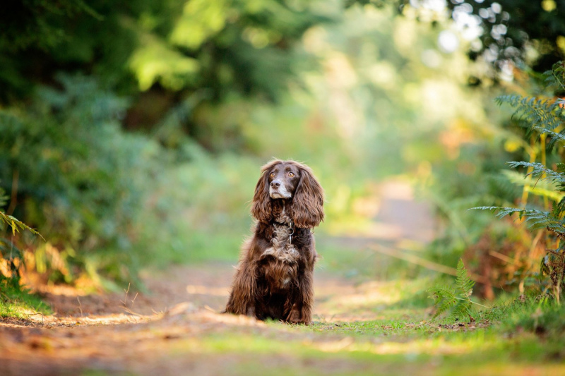 Wildair-Portraits-Dog-Photography-Equine-Photography-Lincolnshire-7