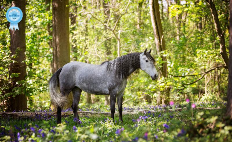 Johanna-Charlton-Dog-Photography-Equine-Photography-Lincolnshire-14