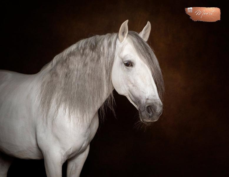 Johanna-Charlton-Dog-Photography-Equine-Photography-Lincolnshire-19