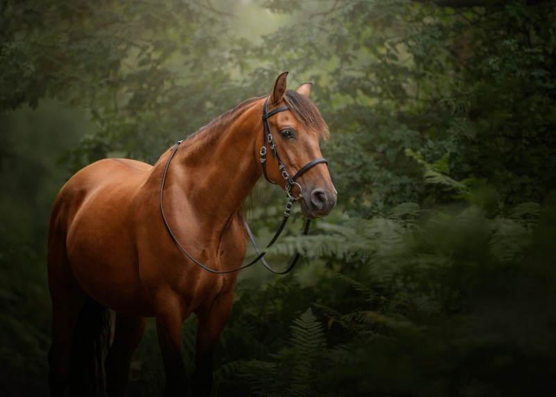 Johanna-Charlton-Dog-Photography-Equine-Photography-Lincolnshire-25