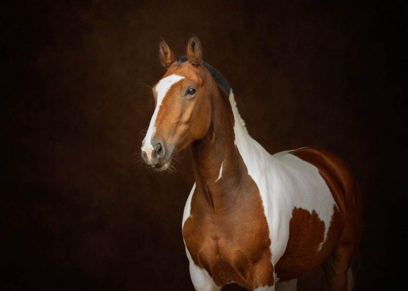 Johanna-Charlton-Dog-Photography-Equine-Photography-Lincolnshire-28