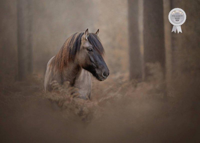 Johanna-Charlton-Dog-Photography-Equine-Photography-Lincolnshire-35