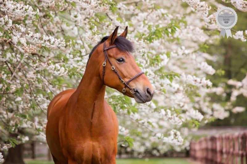 Johanna-Charlton-Dog-Photography-Equine-Photography-Lincolnshire-6