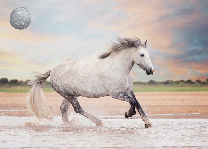 Johanna-Charlton-Dog-Photography-Equine-Photography-Lincolnshire-8