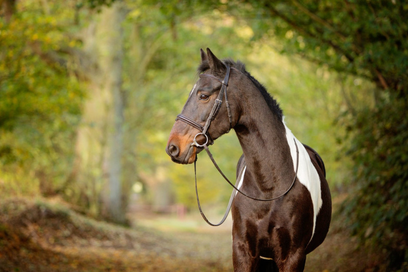 Wildair-Portraits-Dog-Photography-Equine-Photography-Lincolnshire-10