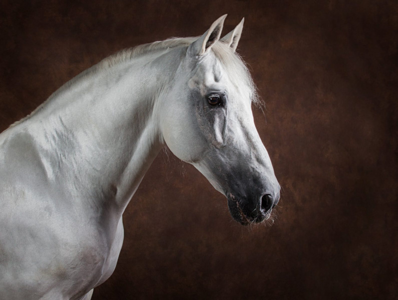 Wildair-Portraits-Dog-Photography-Equine-Photography-Lincolnshire-2