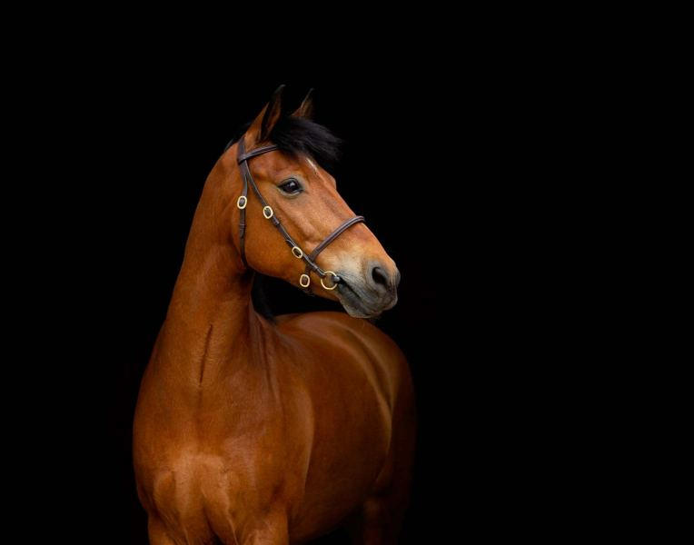 Wildair-Portraits-Dog-Photography-Equine-Photography-Lincolnshire-28
