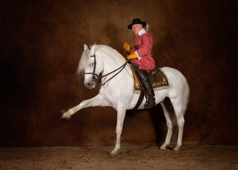 Wildair-Portraits-Dog-Photography-Equine-Photography-Lincolnshire-63