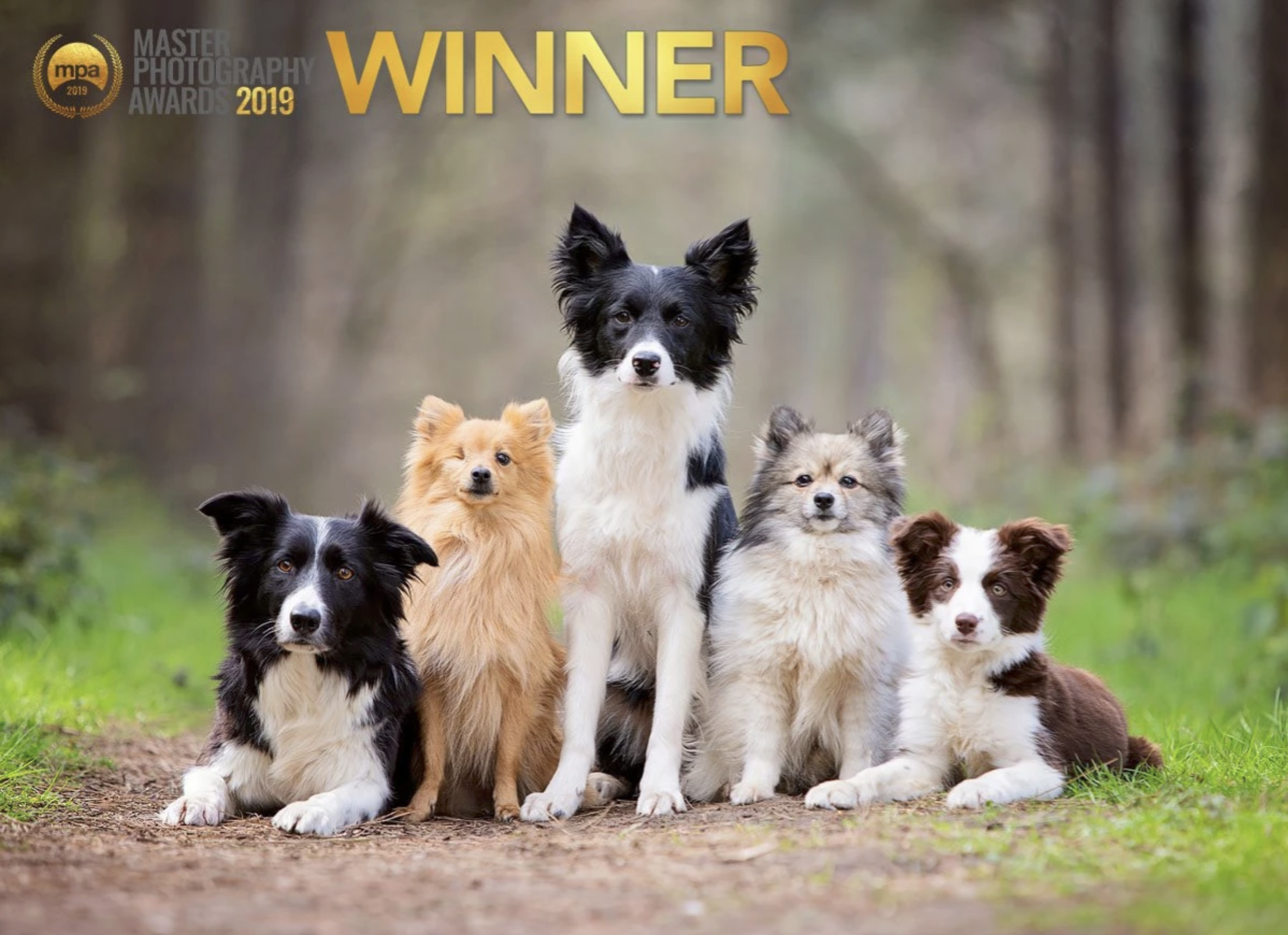 Master Photographer Awards